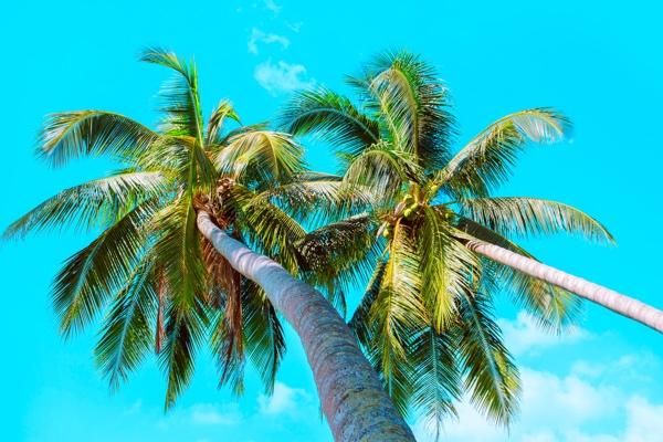 Vacaciones en Junio
