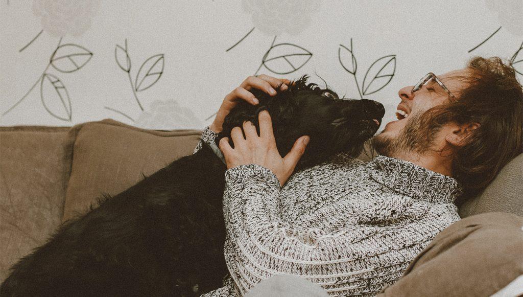 Los lujos que tu perro se merece