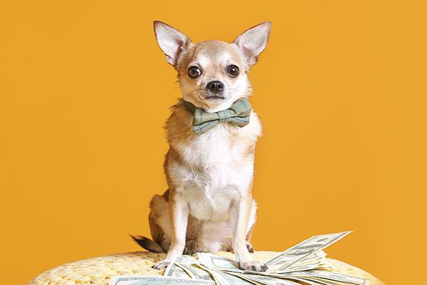 Los lujos que tu perro se merece después del confinamiento