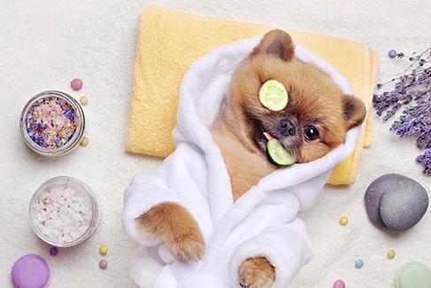 Día Mundial del Perro, perros millonarios